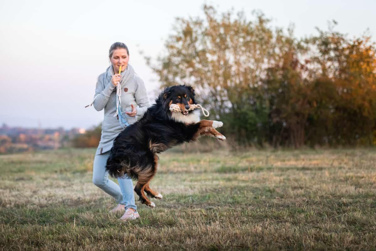 Leichtigkeit im Hundeleben