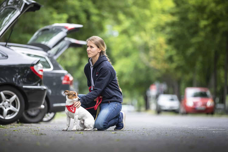 Hundeschule Hundetrainer Hundeerziehung Nancy Wendler Dresden