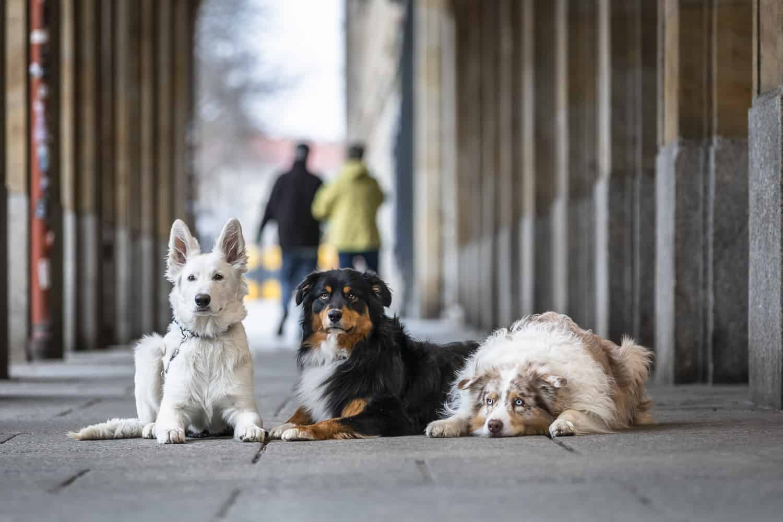 Hundetrainer Hundeschule Dresden Nancy Wendler