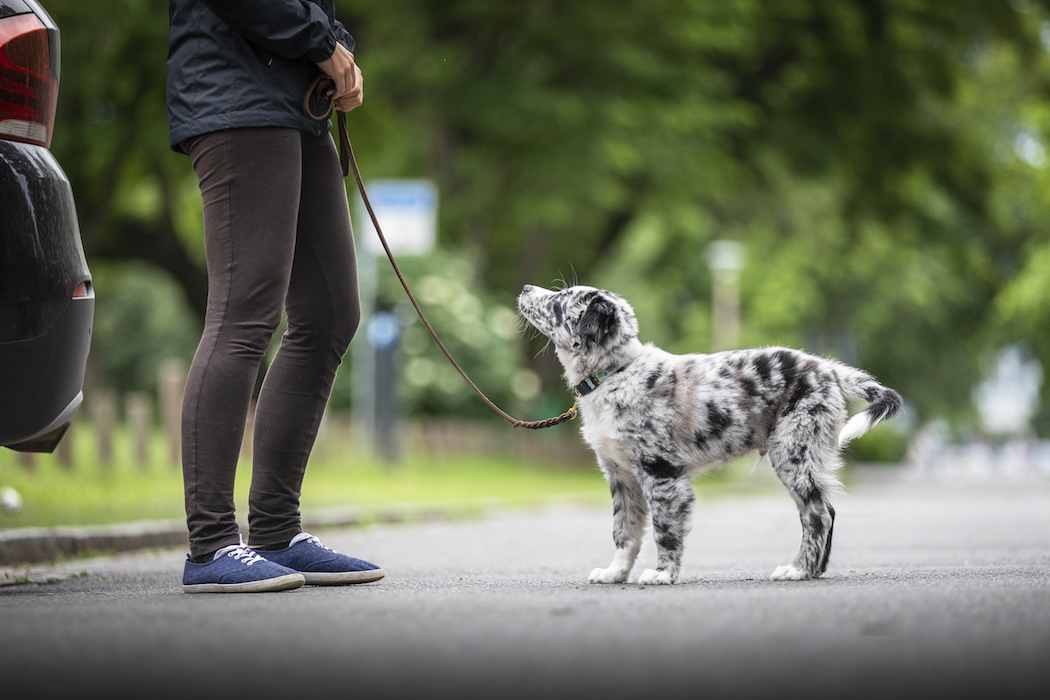 Welpenerziehung Hundetrainer Hundeschule Nancy Wendler Dresden
