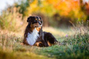 Hundschule Dresden Nancy Wendler Mehrhundehaltung