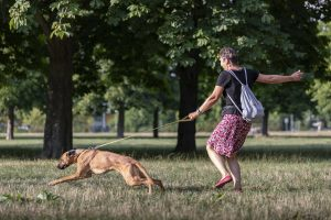 Hund zieht an der Leine, Welpenschule Dresden, welpenspielstunde dresden