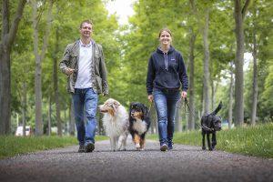 Hundetrainer Dresden und Welpenschule Dresden Nancy Wendler
