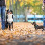 Hundetrainer Dresden, Welpentrainer Dresden Nancy Wendler