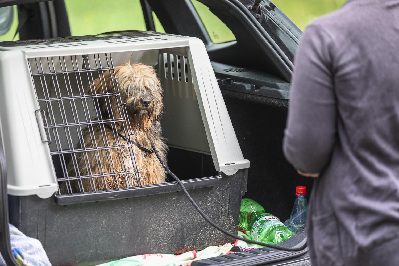 Hundeschule Dresden, Welpenspielstunde Dresden, Hundetrainer Dresden