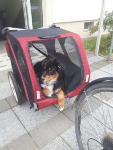 Hundetrainer Dresden, Hundeschule Dresden