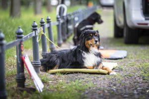 Hundeschule Dresden, Hundetrainer Dresden, Welpenschule Dresden, Welpentrainer Dresden