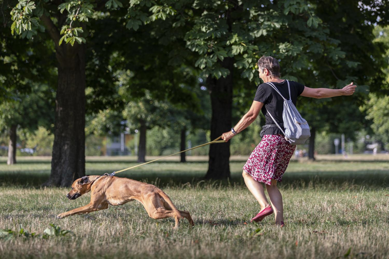 Hundeschule Dresden, Hundetrainer Dresden