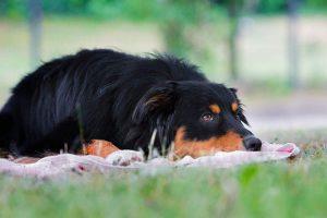 Hundetrainer Dresden, Hundeschule Dresden, Ruhezone