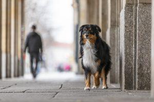 Hundetrainer Dresden, Hundeschule Dresden, Welpenschule Dresden, Welpentrainer Dresden