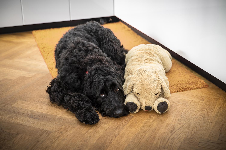 Hundeschule Dresden, Welpenspielstunde Dresden