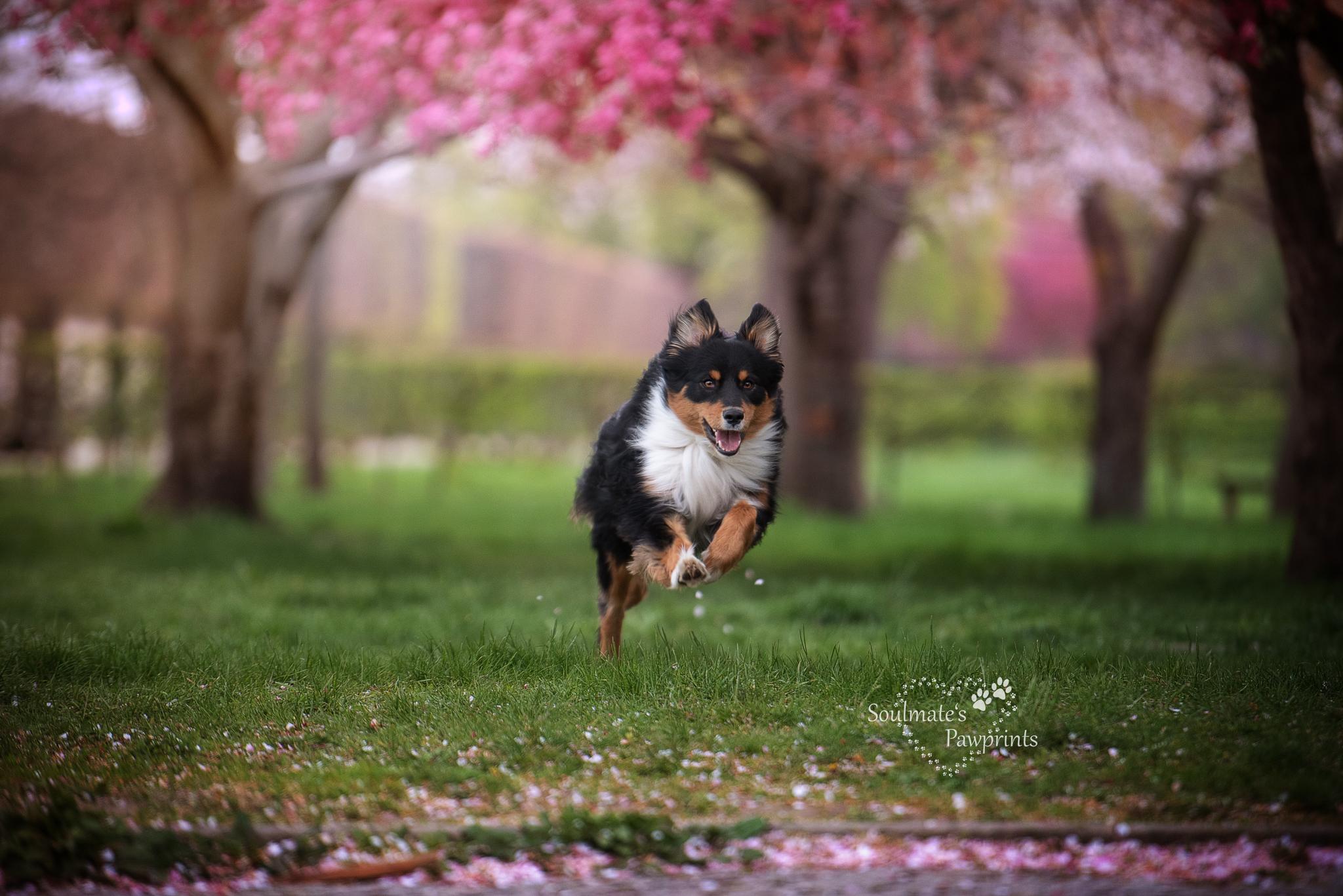Hundeschule-Dresden Aufgeregter Hund