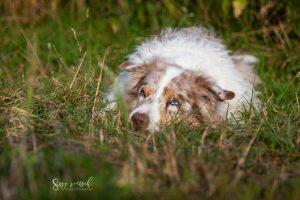 Hundeschule Dresden Nancy Wendler Ruhe