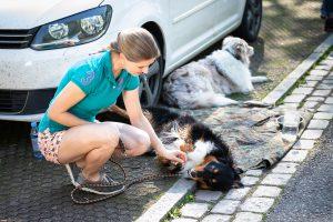 Hundeschule-Dresden-Ruhe lernen