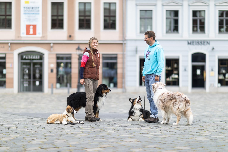 Hundschule Dresden