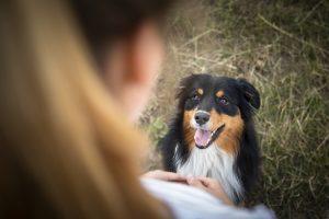 Hundeschule Dresden Nancy Wendler