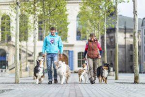 Hundeschule Dresden Nancy Wendle