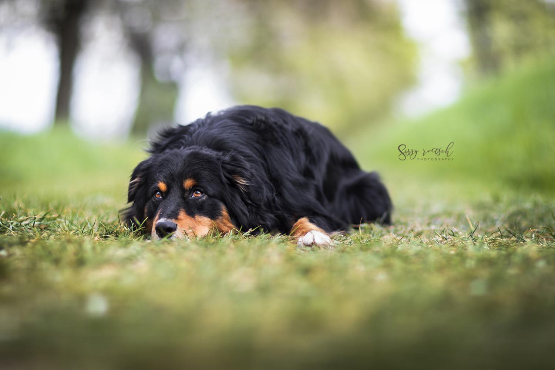 Hundeschule Ruhezone Nancy Wendler