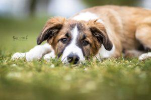 Hundeschule Nancy Wendler Ruhezone