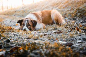 Hundetrainer Nancy Wendler